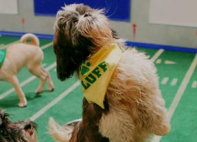 Barking News: Ruff pups steal Puppy Bowl