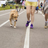 Bark for Life: Canines against cancer